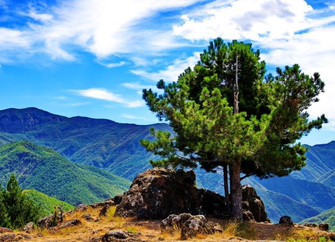 roccia_albero_e_nubi