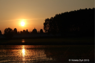 image333_viola_tramonto_1