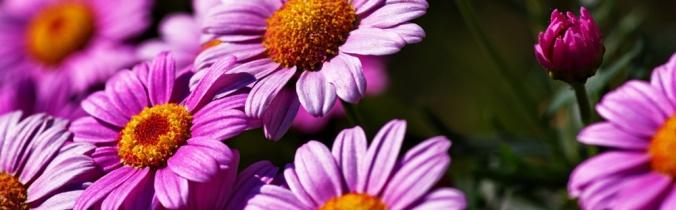 strani_fiori_2