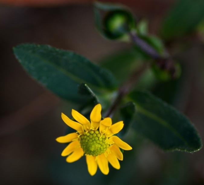 fiore_giallo_1
